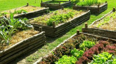 Il Comune di Neviano attiva e promuove sul territorio comunale gli Orti Urbani